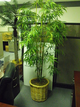 used large artificial plant
